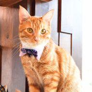 Cambridge Cat Collar
