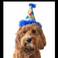 Party Hat Blue