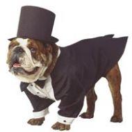 Top Dog Tuxedo